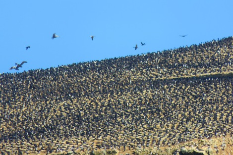The seabirds of the Ballestas Islands - literally thousands of them! count the black dots if you don´t believe me!
