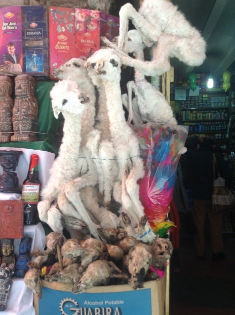 yep. baby llamas and llama fetuses. Gross, right? Apparently it is good luck to bury one under any new construction as a sacrifice to Pachamama (mother earth).